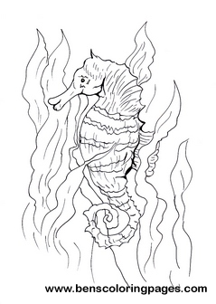Drawn seahorse underwate animal Free page coloring books Sea