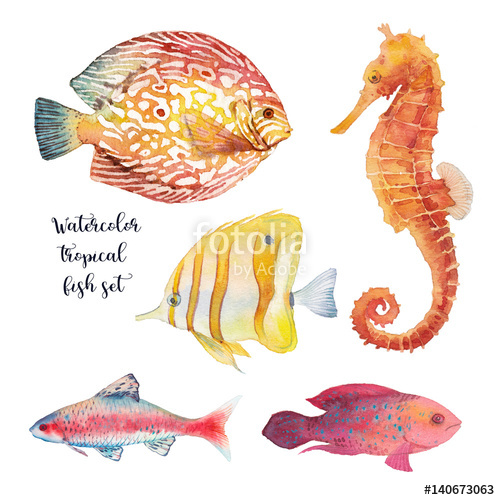 Drawn seahorse underwate animal Drawn tropical of coral fishes