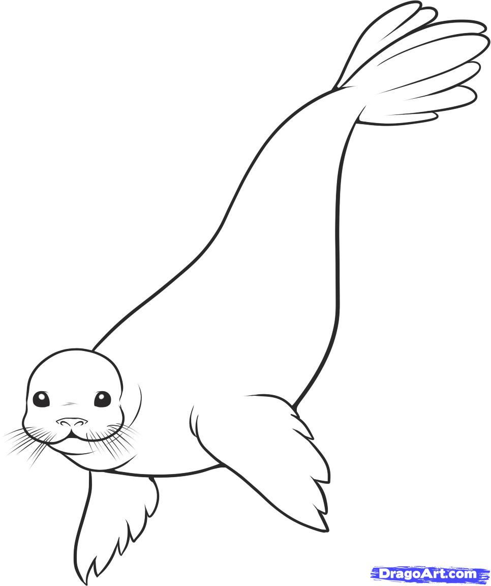 Drawn seal A to Draw animals Seal