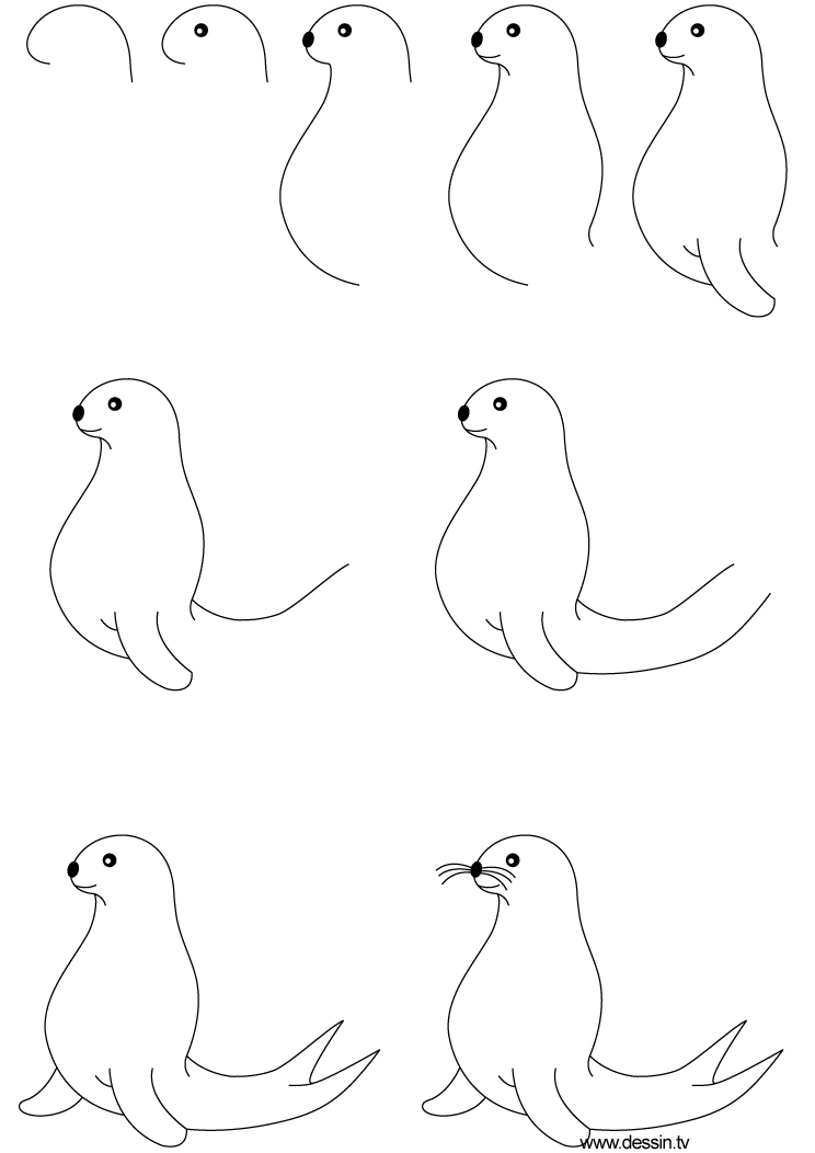 Drawn seal easy art Learn you To Draw cute