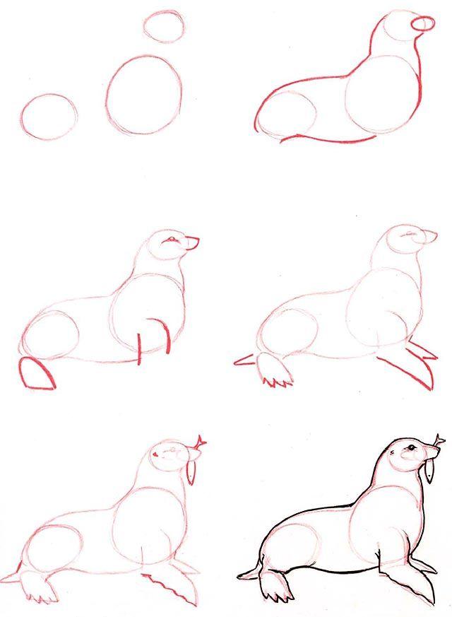 Drawn seal easy art Seal that Pinterest Artist like