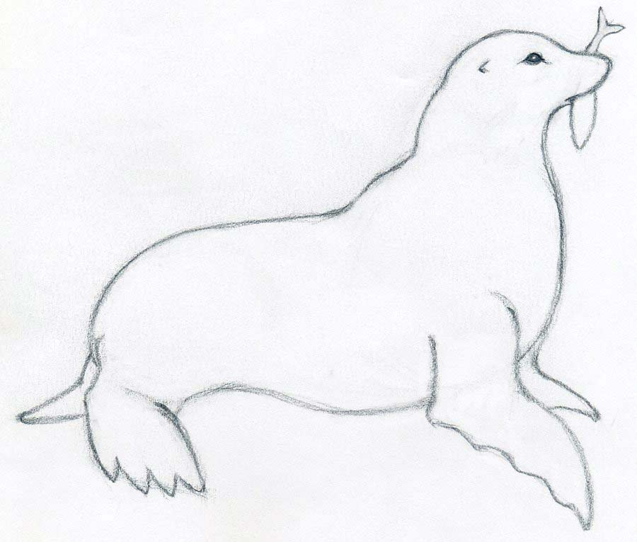 Drawn seal easy art Rough mouth of a To