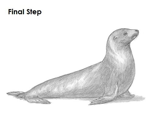 Drawn seal ocean animal Seal 17 Pinterest Last images