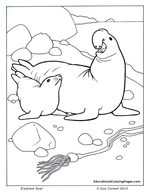 Drawn seal ocean animal Coloring seal coloring Animal Pages