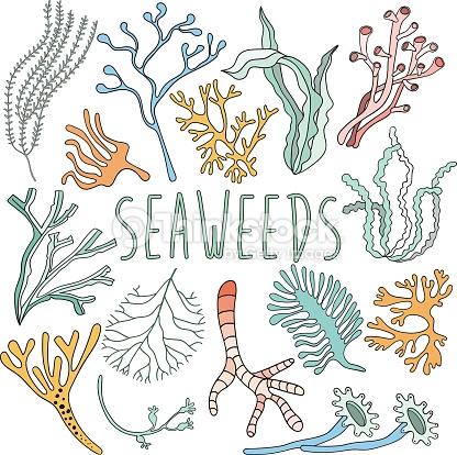 Drawn seaweed  Drawn Life Sea Plant