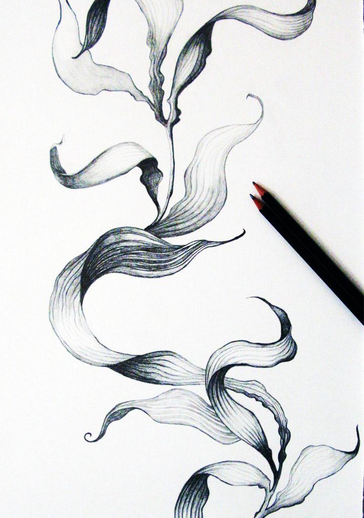 Drawn seaweed Of drawing Tamara ~ Funky