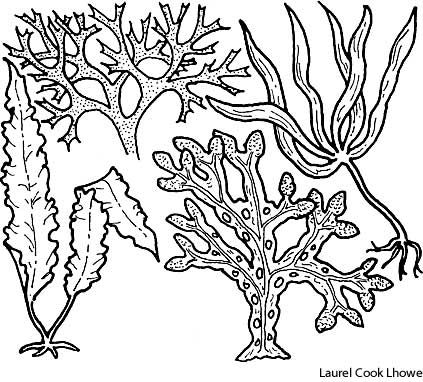 Drawn seaweed clipart Best and Pin Seaweed images