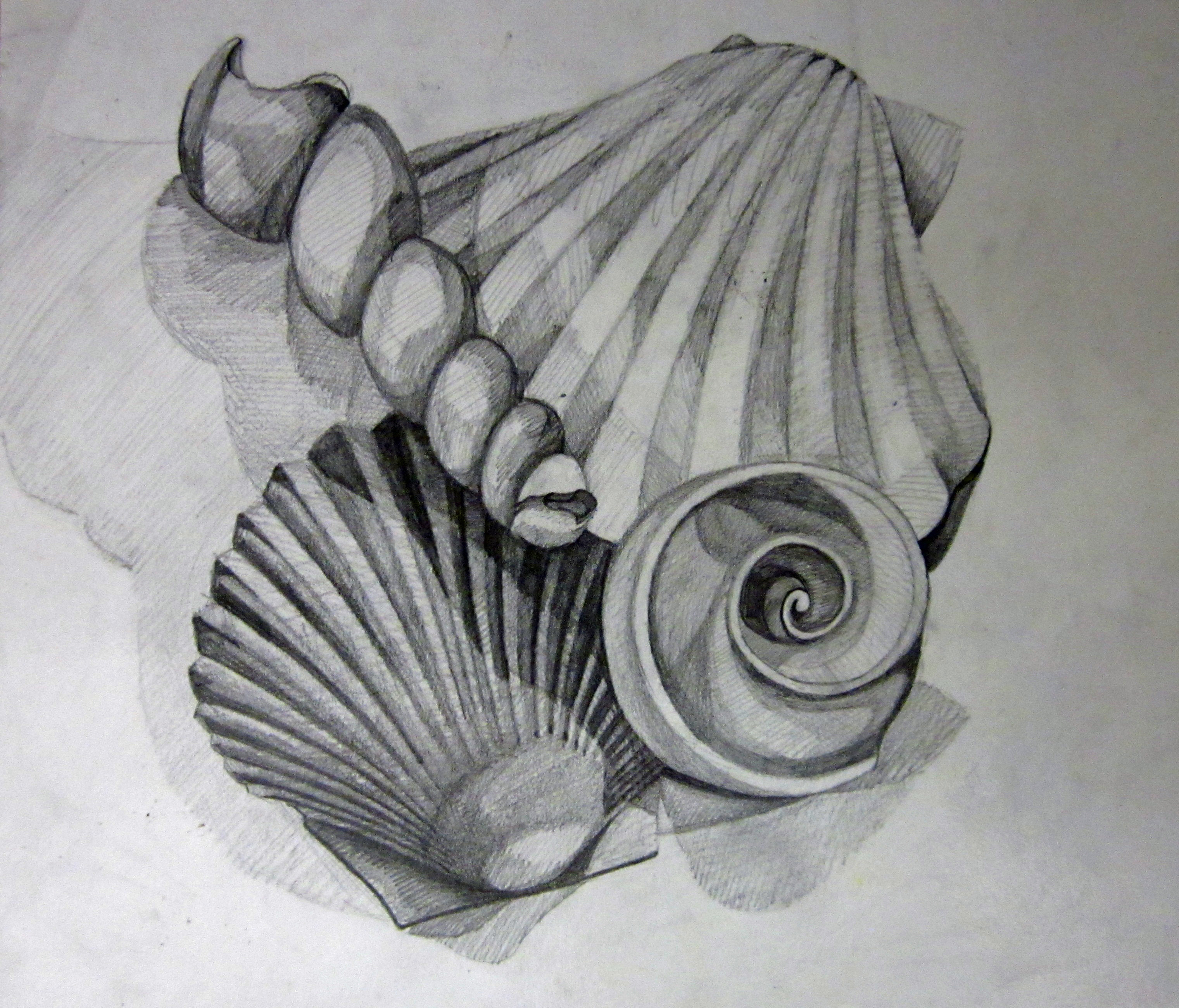 Drawn seaweed sea water Grade Still Middle  Shells