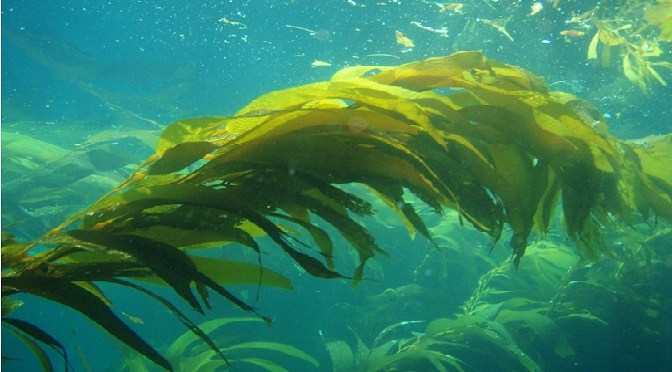 Drawn seaweed ocean algae Acidification key NEWS to