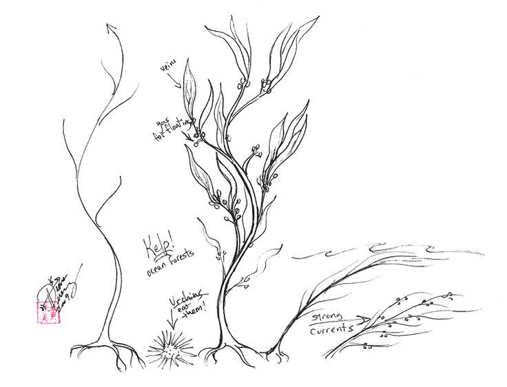 Drawn seaweed realistic Blank Kelp Seaweed ~Diana Drawing