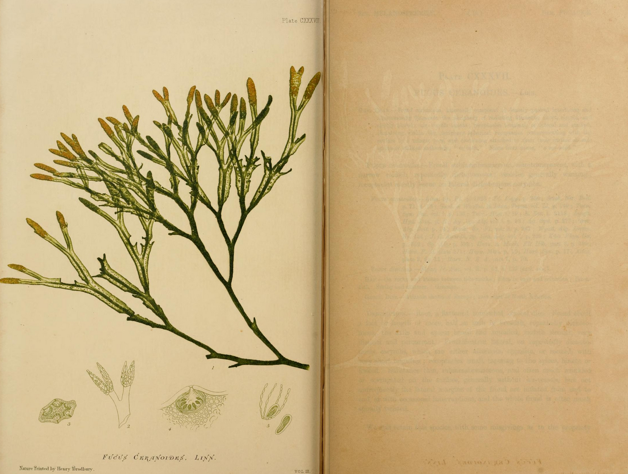 Drawn seaweed realistic Of Croall's Johnstone by Weekly