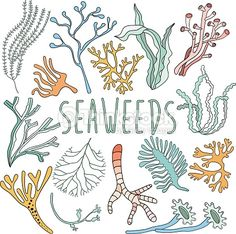 Drawn seaweed sea water Back coral For Sea drawing