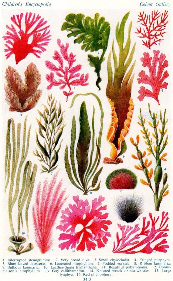 Drawn seaweed under sea  Capricho Miss artist's for