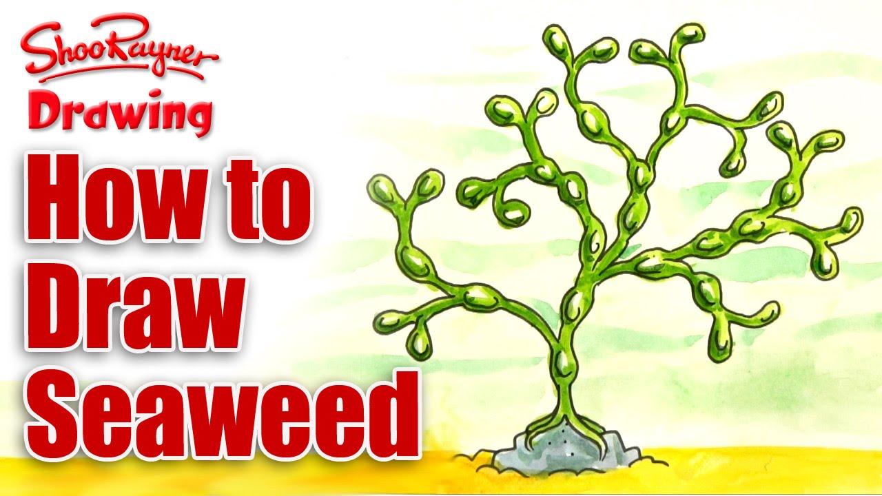 Drawn seaweed under sea How seaweed YouTube draw to