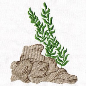 Drawn seaweed under sea Embroidery Sea Sea The Under