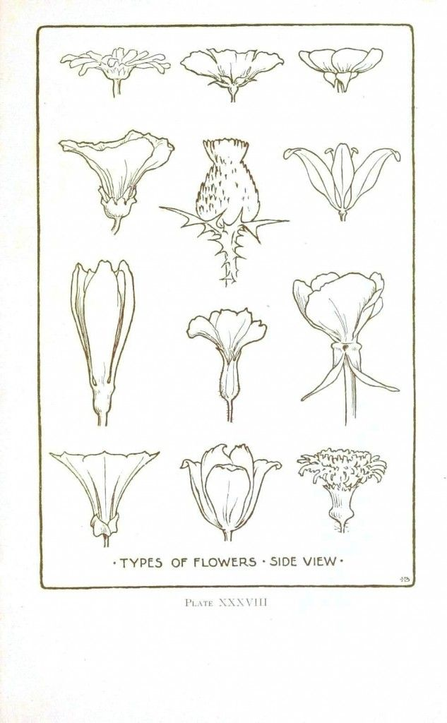 Drawn vintage flower line drawn Drawings – – Printable line