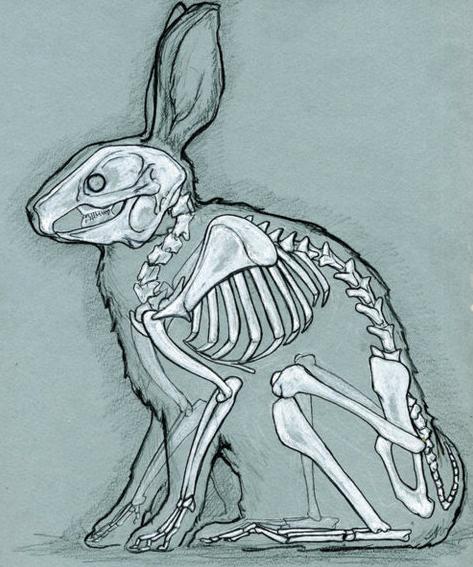 Drawn rabbid skull Rabbit see love skeleton someone