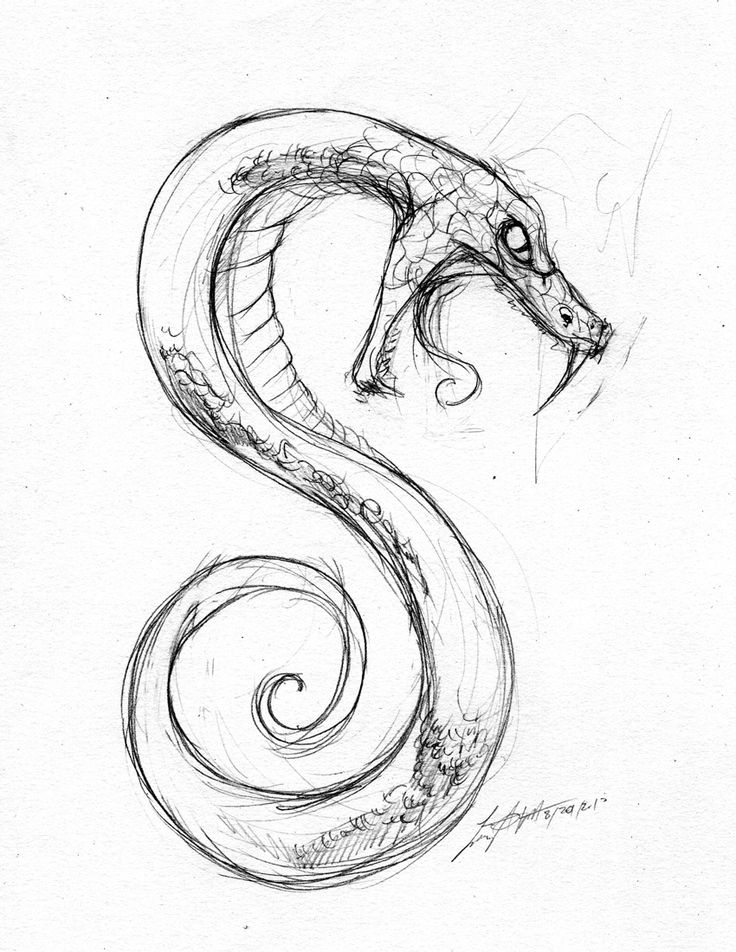 Drawn serpent On best 25+ More drawing