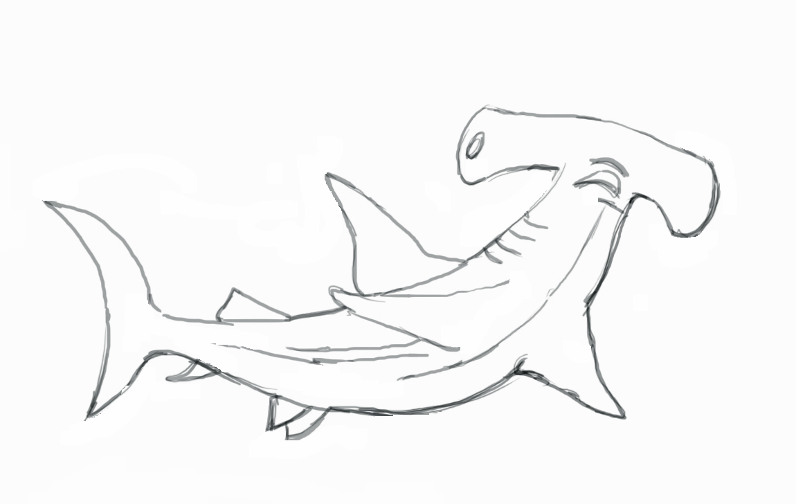 Drawn whale realistic Step To by a Draw