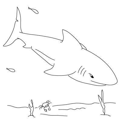 Drawn animal shark #1
