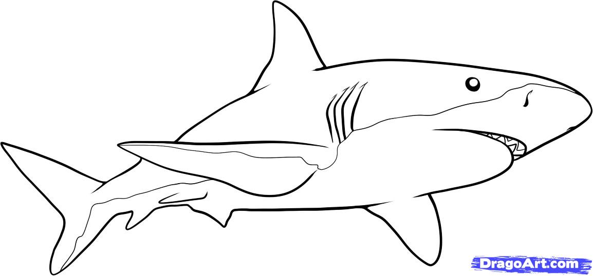 Tiger Shark clipart easy draw #12