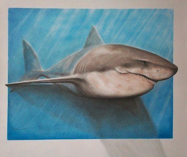 Drawn shark 3d street art Art pencil drawings Shark Pencil