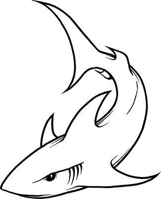 Drawn shark Whale Shark Pinterest  illustration