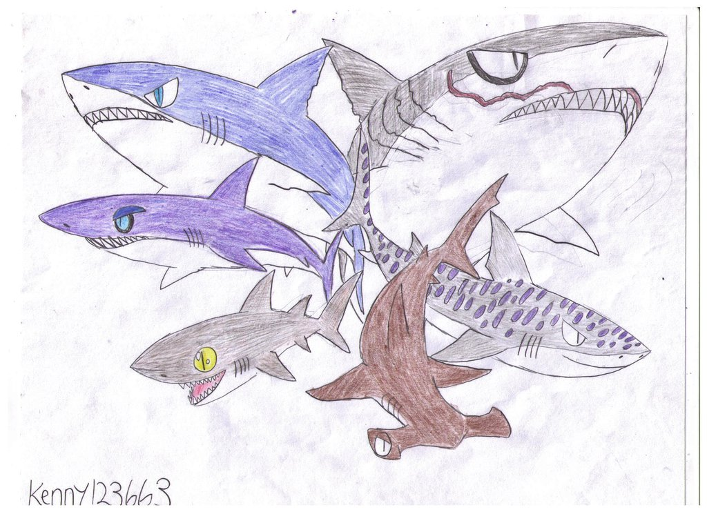 Drawn shark angry shark Kenny123663 Shark on Evolution: Sharks