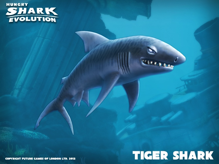 Drawn shark angry shark Shark jpg  jpg Banner