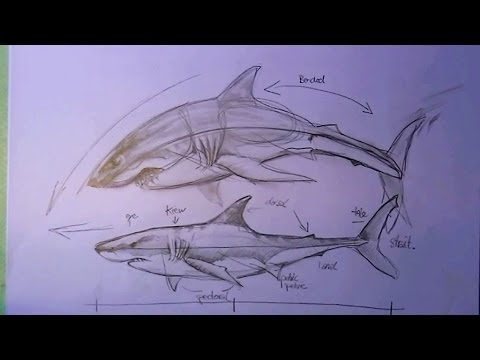 Drawn shark angry shark Tutorial beginners pencil in pencil