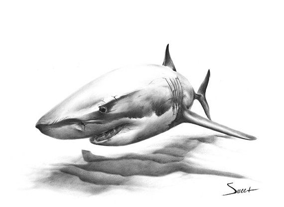 Drawn shark graffiti Art de regalo 25+ Pinterest