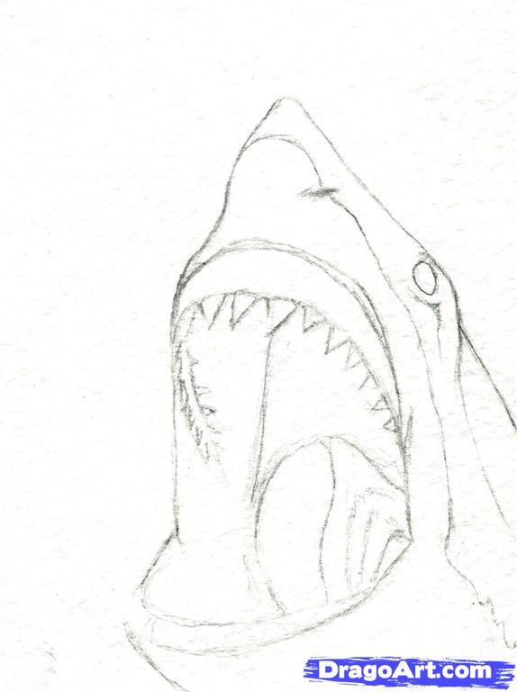 Drawn shark graffiti Step how head a a