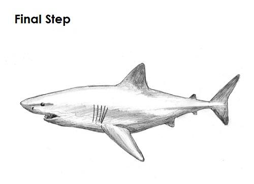 Drawn shark great white shark Tonal Google shark Search tonal