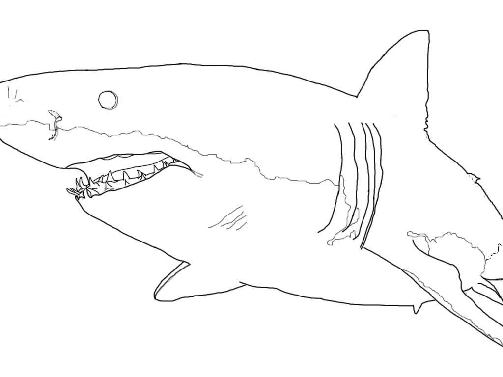 Drawn shark great white shark Great Pages coloring Great white