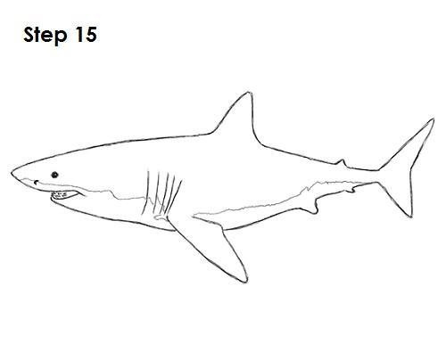 Drawn shark great white shark To (Great Shark White) Draw
