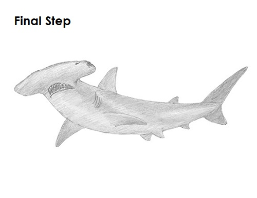 Drawn shark hammerhead shark Draw to Shark Shark a