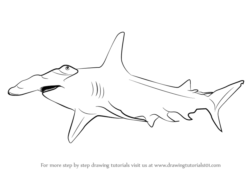 Drawn shark hammerhead shark Shark Hammerhead drawings Drawings Hammerhead