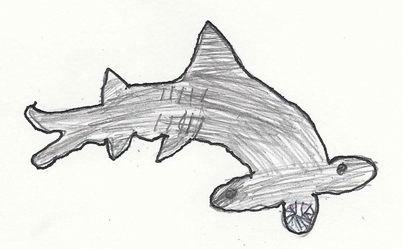 Drawn shark hammerhead shark Kid By kid hammerhead Jr