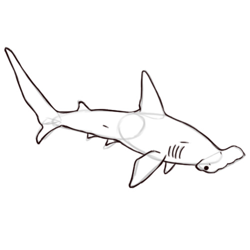 Drawn shark hammerhead shark 5 (with 16 4 Steps