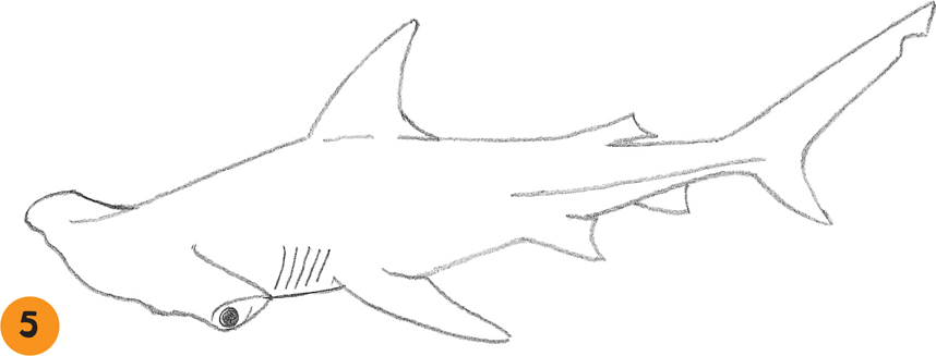 Drawn shark hammerhead shark [Book] Hammerhead Sharks fun to
