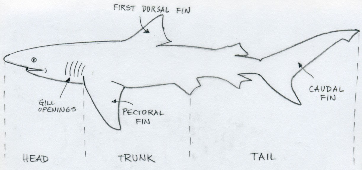 Drawn shark line drawing Open Copy tab on in