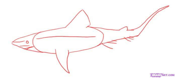 Drawn shark mako shark Online Step  Animals a