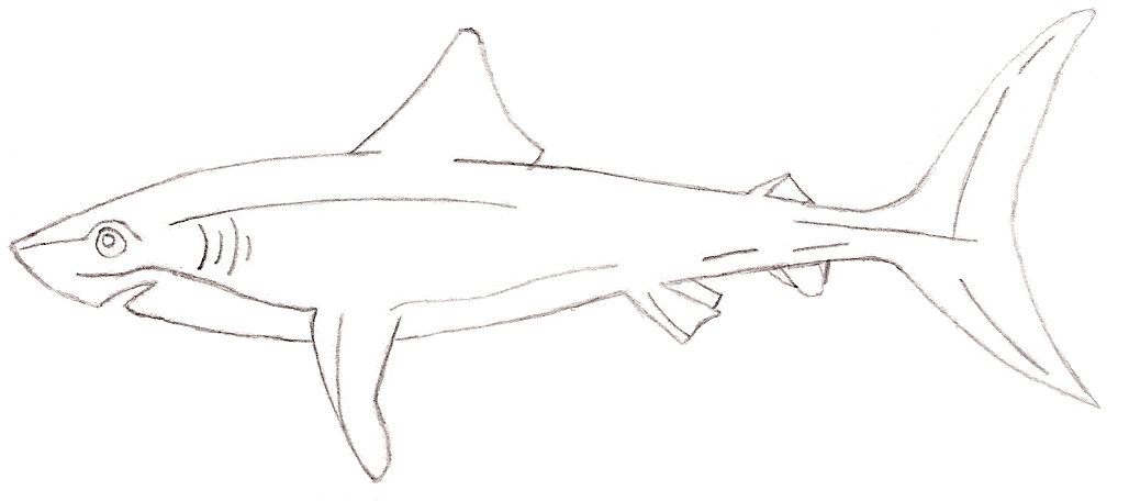 Drawn shark mako shark Jaina by anne on DeviantArt