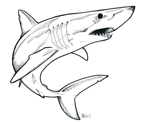Drawn shark mako shark Search Google Pinterest Squali e