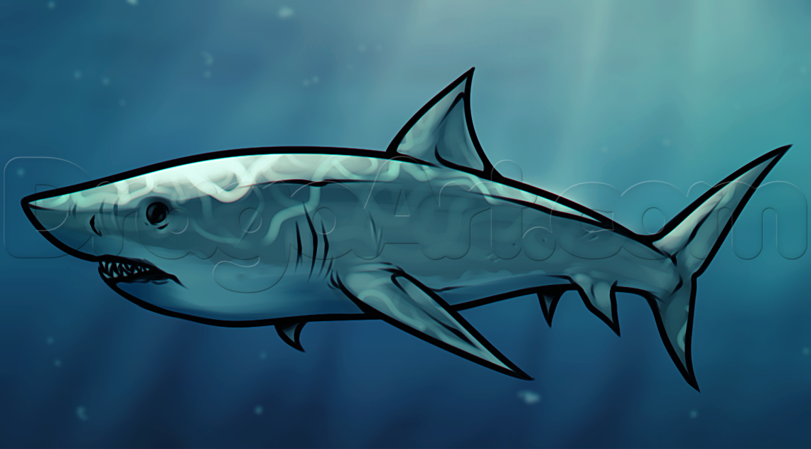 Drawn shark mako shark Animals Online a Fish draw
