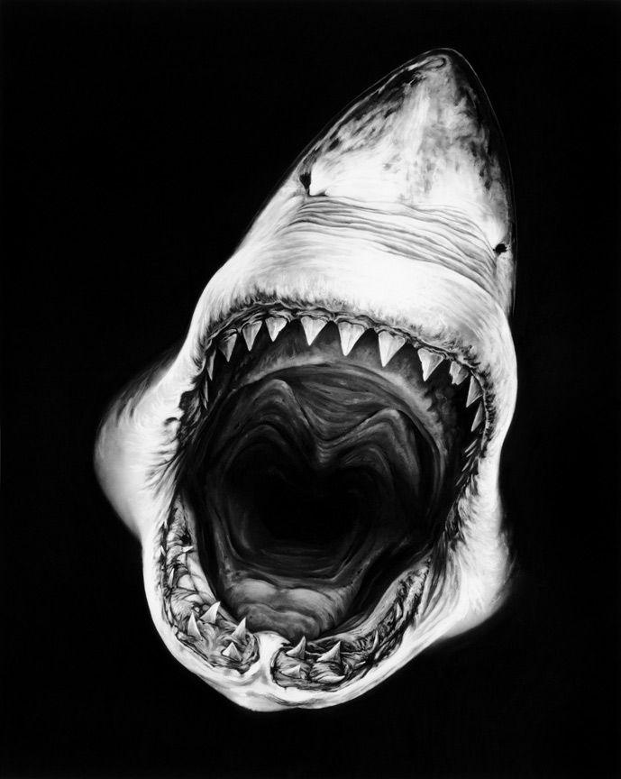 Drawn shark open mouth Drawings Shark ideas Best Charcoal