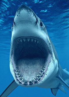 Drawn shark open mouth Mouth Cool white Tatoos Shark
