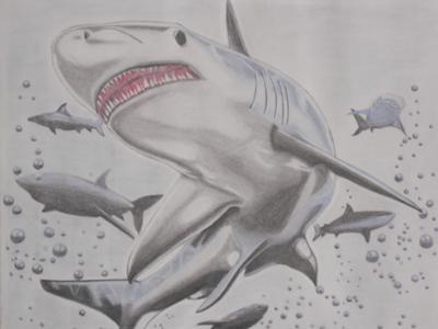 Drawn shark pen and ink Various Animals of Shark! Drawings