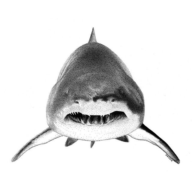 Drawn shark pen and ink & Pen Shark on and