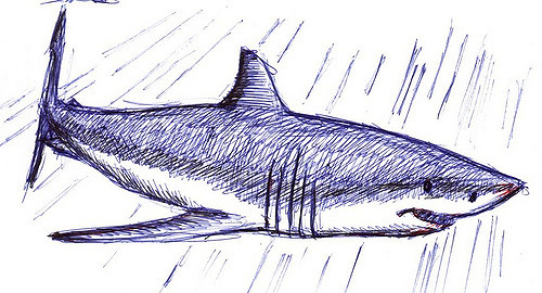 Drawn shark pen and ink Biro Shark Flickr White but